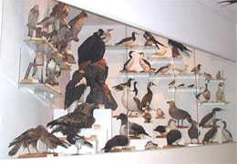 One of show-windows with birds